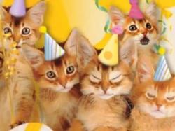americangreetings_birthday_cats
